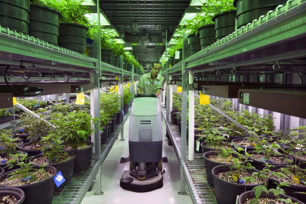 Cannabis Legalization in Colorado, USA - 2014